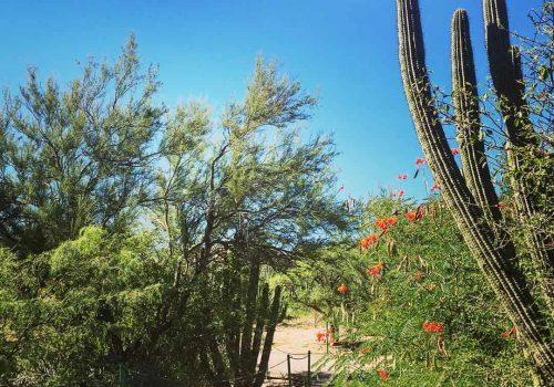 Centro Ecologico Del Estado De Sonora